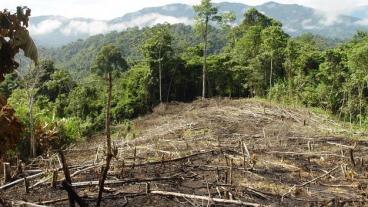Los bosques argentinos sin presupuesto