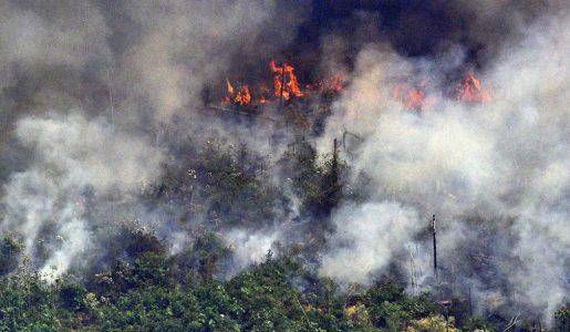 Amazonia arde. Argentina, sequías